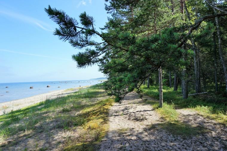 Altja Strand 5
